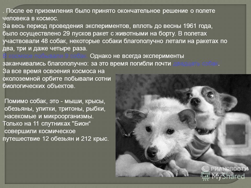 . После ее приземления было принято окончательное решение о полете человека в космос. За весь период проведения экспериментов, вплоть до весны 1961 года, было осуществлено 29 пусков ракет с животными на борту. В полетах участвовали 48 собак, некоторы