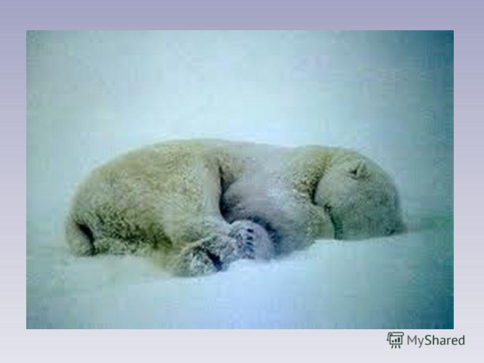Как на горке - снег, снег, И под горкой - снег, снег, И на елке - снег, снег, И под елкой - снег, снег. А под снегом спит медведь. Тише, тише. Не шуметь! И. Токмакова