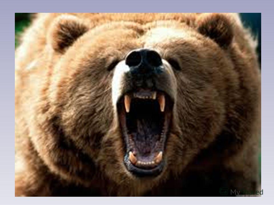 Уронила белка... Уронила белка шишку, Шишка стукнула зайчишку. Тот пустился наутёк, чуть не сбил медведя с ног... Под корнями старой ели размышлял медведь полдня: «Что-то зайцы осмелели... Нападают на меня». В. Шулъжик