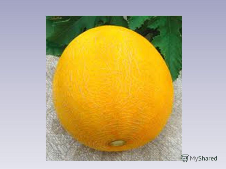 Круглая, а не месяц. Желтая, а не масло. Сладкая, а не сахар. С хвостом, а не мышь.