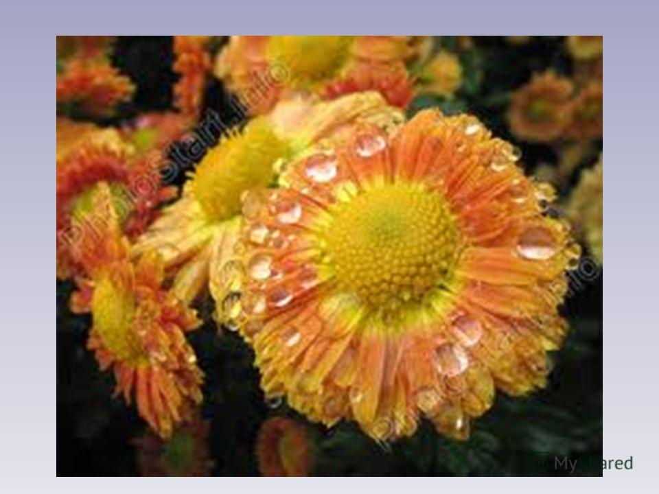 Рано утром на цветах Ты найдёшь меня в садах. Станет солнышко катиться – И исчезнет вся водица.