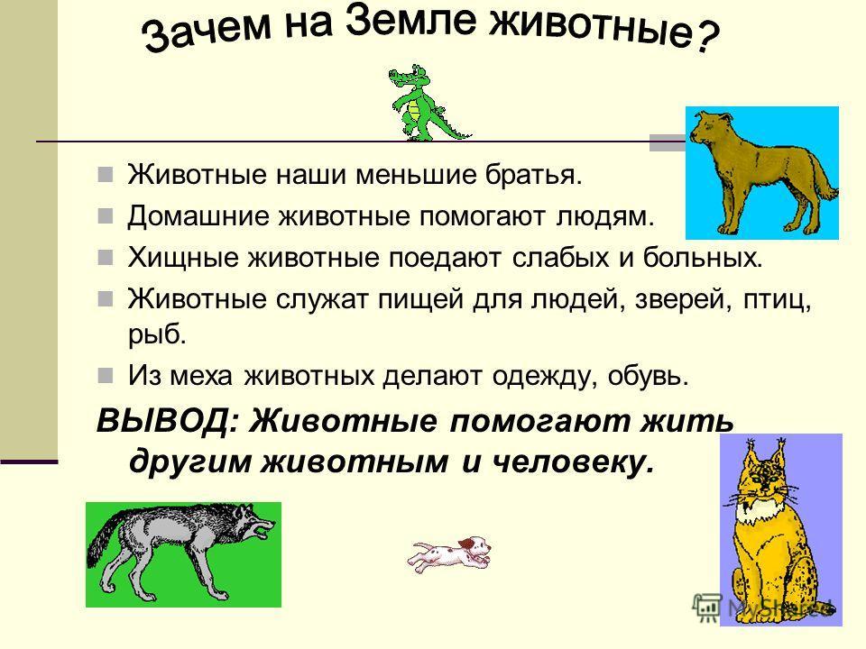 Животные наши меньшие братья. Домашние животные помогают людям. Хищные животные поедают слабых и больных. Животные служат пищей для людей, зверей, птиц, рыб. Из меха животных делают одежду, обувь. ВЫВОД: Животные помогают жить другим животным и челов
