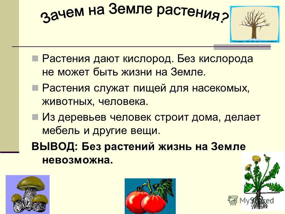 Конвенция любви растения это понятие для детей пищевое производство