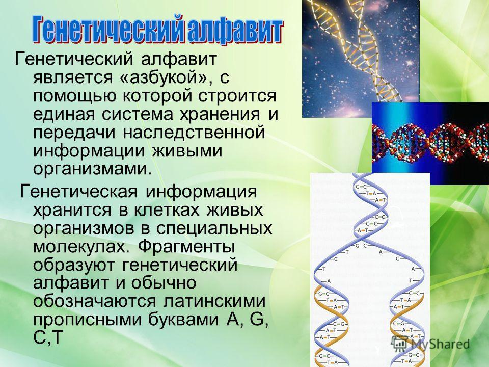 Генетический алфавит является «азбукой», с помощью которой строится единая система хранения и передачи наследственной информации живыми организмами. Генетическая информация хранится в клетках живых организмов в специальных молекулах. Фрагменты образу