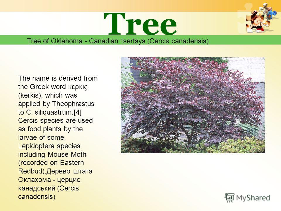 Tree Tree of Oklahoma - Canadian tsertsys (Cercis canadensis) The name is derived from the Greek word κερκις (kerkis), which was applied by Theophrastus to C. siliquastrum.[4] Cercis species are used as food plants by the larvae of some Lepidoptera s
