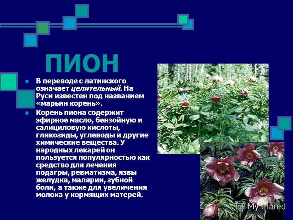 ПИОН В переводе с латинского означает целительный. На Руси известен под названием «марьин корень». Корень пиона содержит эфирное масло, бензойную и салициловую кислоты, гликозиды, углеводы и другие химические вещества. У народных лекарей он пользует