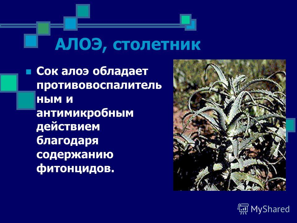 АЛОЭ, столетник Сок алоэ обладает противовоспалитель ным и антимикробным действием благодаря содержанию фитонцидов.