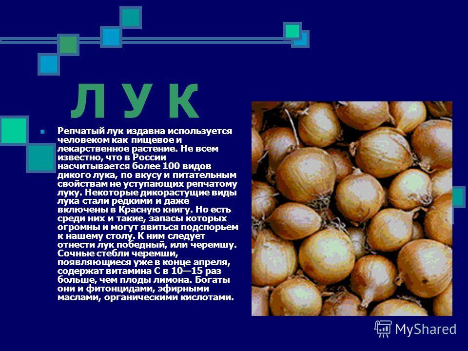 Л У К Репчатый лук издавна используется человеком как пищевое и лекарственное растение. Не всем известно, что в России насчитывается более 100 видов дикого лука, по вкусу и питательным свойствам не уступающих репчатому луку. Некоторые дикорастущие ви
