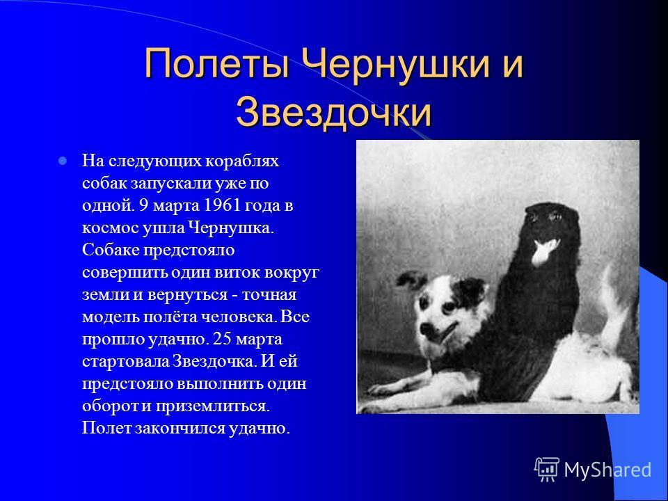 Полеты Чернушки и Звездочки На следующих кораблях собак запускали уже по одной. 9 марта 1961 года в космос ушла Чернушка. Собаке предстояло совершить один виток вокруг земли и вернуться - точная модель полёта человека. Все прошло удачно. 25 марта ста