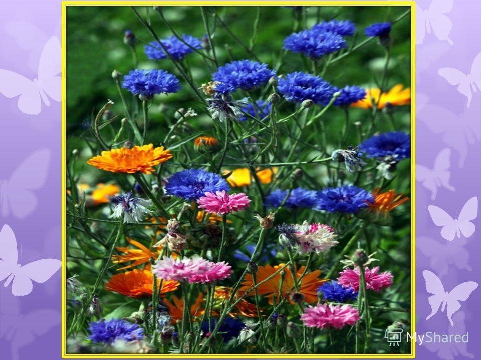 ЦВЕТОК Над уснувшей нивой дышит Легкий ветерок; Он ласкает, он колышет Полевой цветок. И цветок от ласки нежной Ветерка дрожит, И глубокий, безмятежный Сон его манит. Отдохнуть цветку отрадно В тишине ночной: Днем его палил нещадно Душный летний зной