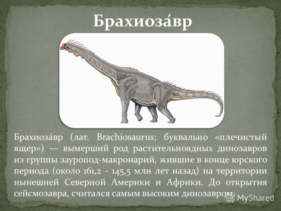 Брахиоза́вр (лат. Brachiosaurus; буквально «плечистый ящер») вымерший род растительноядных динозавров из группы зауропод-макронарий, жившие в конце юрского периода (около 161,2 - 145,5 млн лет назад) на территории нынешней Северной Америки и Африки.
