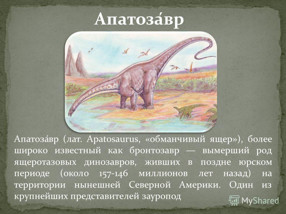 Апатоза́вр (лат. Apatosaurus, «обманчивый ящер»), более широко известный как бронтозавр вымерший род ящеротазовых динозавров, живших в поздне юрском периоде (около 157-146 миллионов лет назад) на территории нынешней Северной Америки. Один из крупнейш