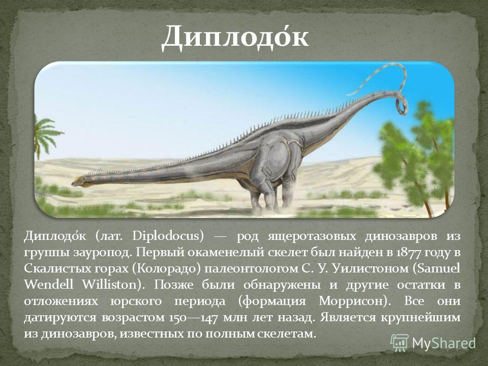 Диплодо́к (лат. Diplodocus) род ящеротазовых динозавров из группы зауропод. Первый окаменелый скелет был найден в 1877 году в Скалистых горах (Колорадо) палеонтологом С. У. Уилистоном (Samuel Wendell Williston). Позже были обнаружены и другие остатки