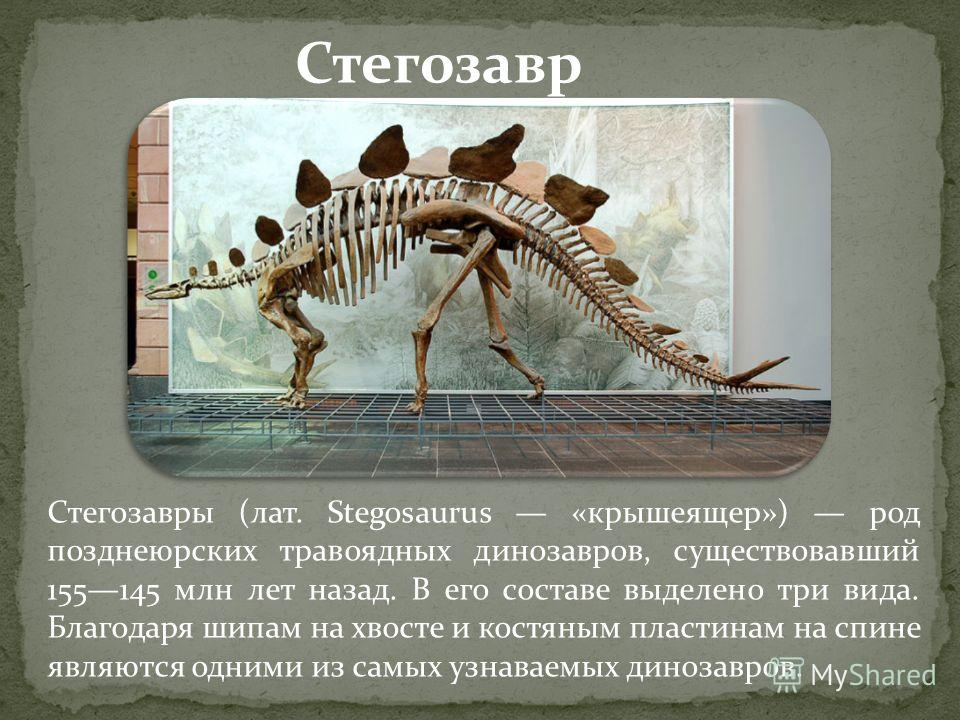 Стегозавры (лат. Stegosaurus «крышеящер») род позднеюрских травоядных динозавров, существовавший 155145 млн лет назад. В его составе выделено три вида. Благодаря шипам на хвосте и костяным пластинам на спине являются одними из самых узнаваемых диноза