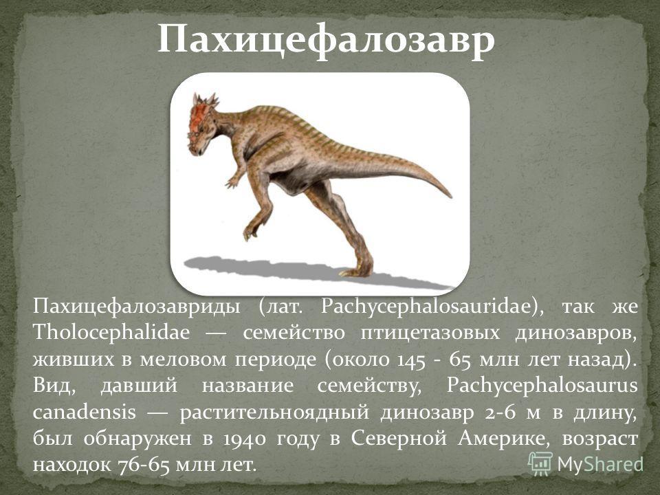 Пахицефалозавриды (лат. Pachycephalosauridae), так же Tholocephalidae семейство птицетазовых динозавров, живших в меловом периоде (около 145 - 65 млн лет назад). Вид, давший название семейству, Pachycephalosaurus canadensis растительноядный динозавр