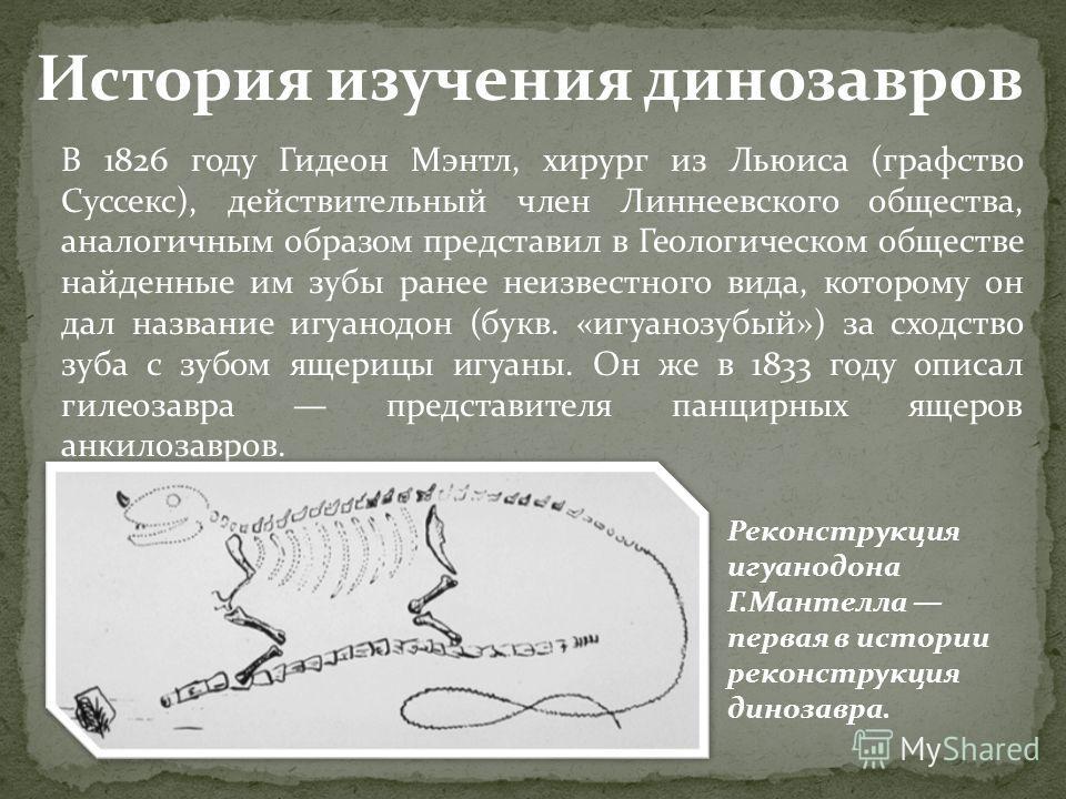 В 1826 году Гидеон Мэнтл, хирург из Льюиса (графство Суссекс), действительный член Линнеевского общества, аналогичным образом представил в Геологическом обществе найденные им зубы ранее неизвестного вида, которому он дал название игуанодон (букв. «иг
