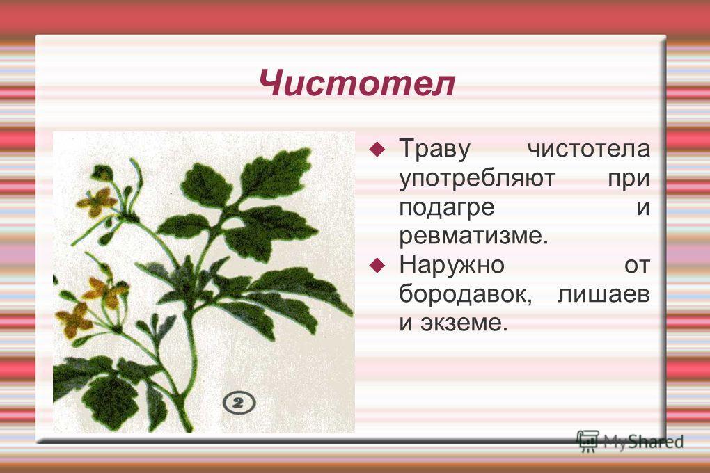 Чистотел Траву чистотела употребляют при подагре и ревматизме. Наружно от бородавок, лишаев и экземе.