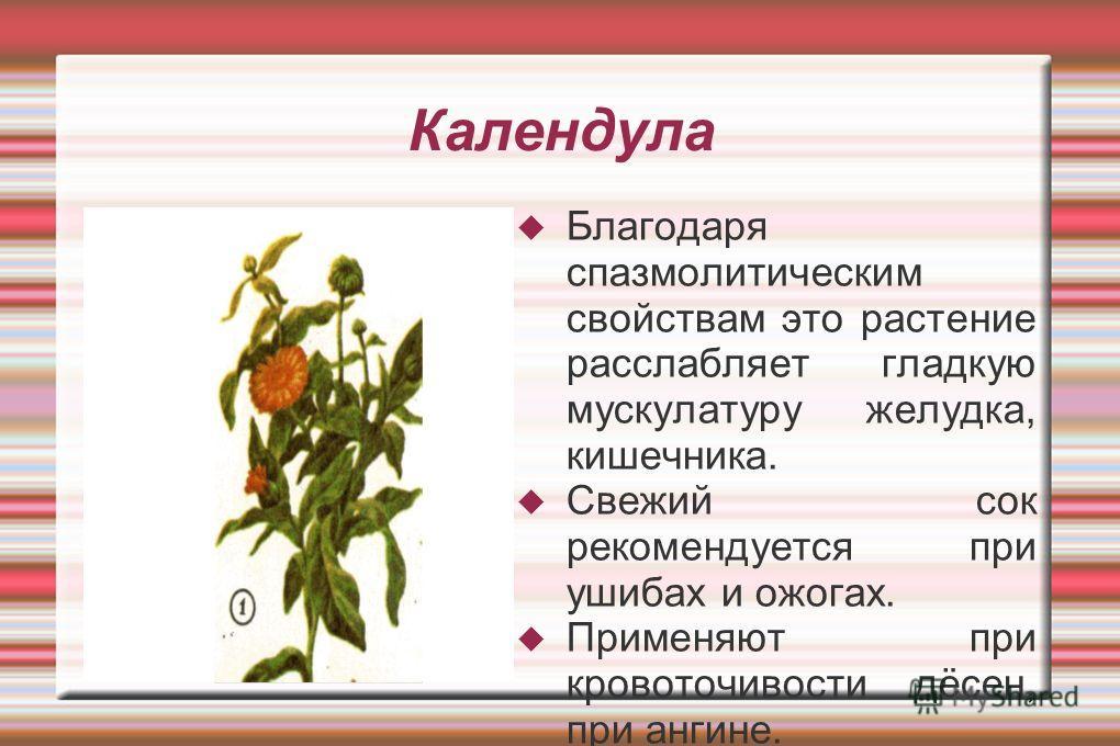 Календула Благодаря спазмолитическим свойствам это растение расслабляет гладкую мускулатуру желудка, кишечника. Свежий сок рекомендуется при ушибах и ожогах. Применяют при кровоточивости дёсен, при ангине.