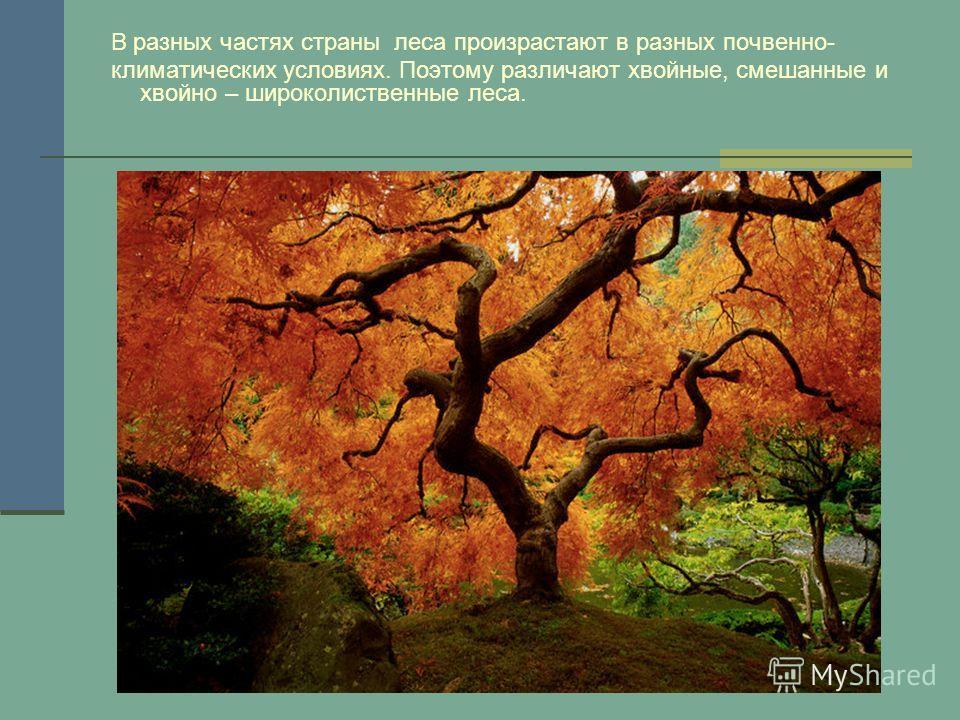 В разных частях страны леса произрастают в разных почвенно- климатических условиях. Поэтому различают хвойные, смешанные и хвойно – широколиственные леса.