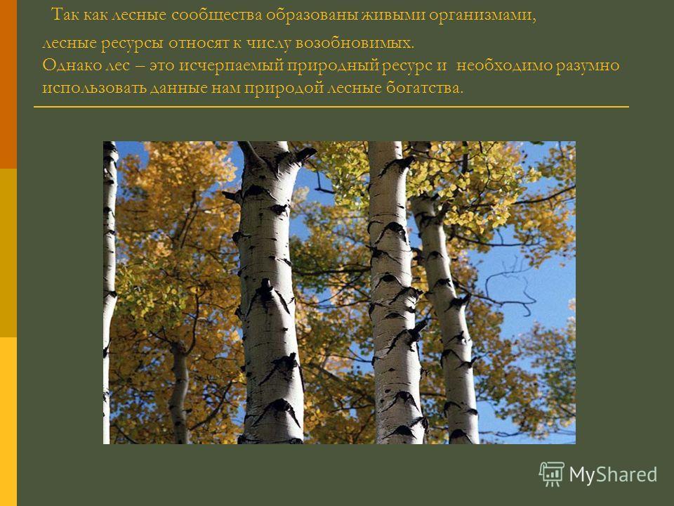 Так как лесные сообщества образованы живыми организмами, лесные ресурсы относят к числу возобновимых. Однако лес – это исчерпаемый природный ресурс и необходимо разумно использовать данные нам природой лесные богатства.