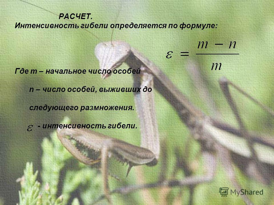 РАСЧЕТ. Интенсивность гибели определяется по формуле: Где m – начальное число особей n – число особей, выживших до следующего размножения. - интенсивность гибели.