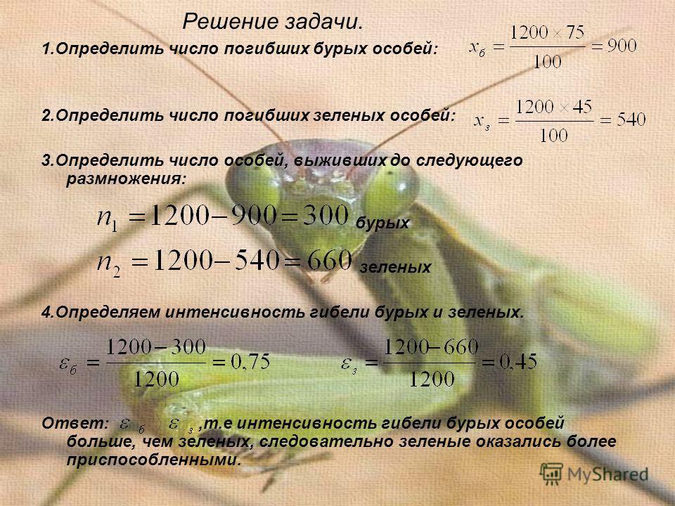 Решение задачи. 1.Определить число погибших бурых особей: 2.Определить число погибших зеленых особей: 3.Определить число особей, выживших до следующего размножения: бурых зеленых 4.Определяем интенсивность гибели бурых и зеленых. Ответ:,т.е интенсивн