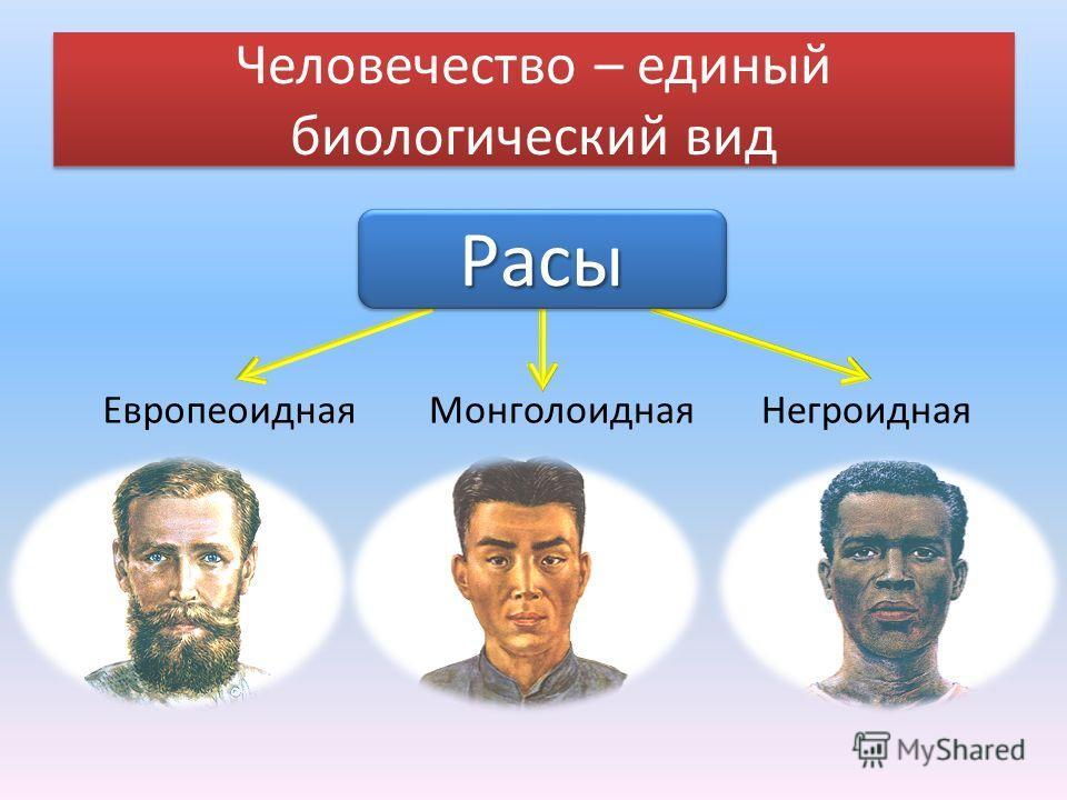 Человечество – единый биологический вид ЕвропеоиднаяМонголоиднаяНегроидная РасыРасы