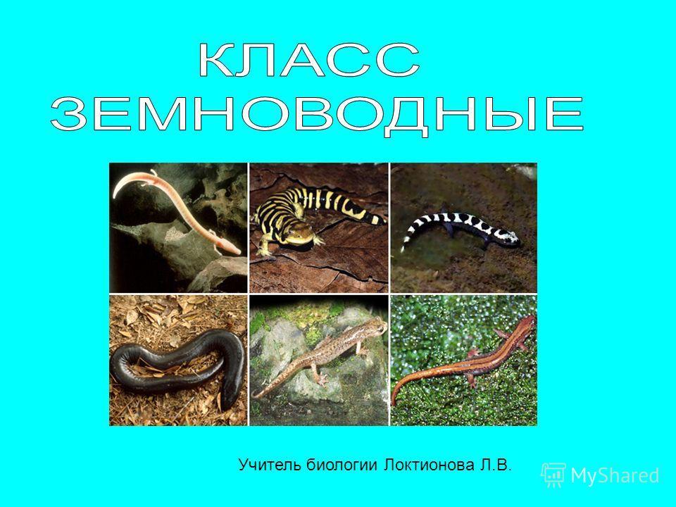 Учитель биологии Локтионова Л.В.