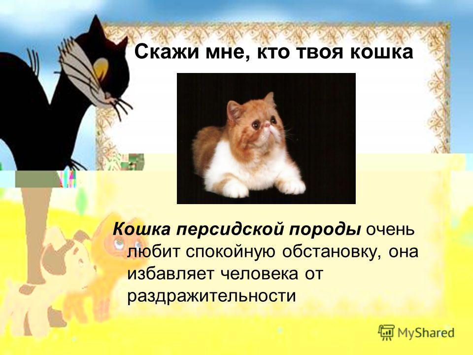 Скажи мне, кто твоя кошка Кошка персидской породы очень любит спокойную обстановку, она избавляет человека от раздражительности