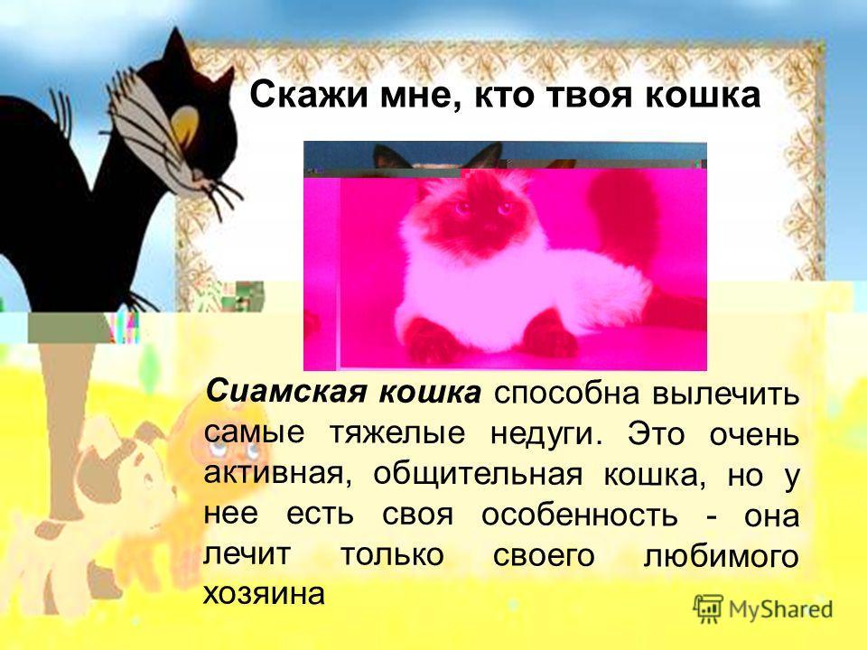 Скажи мне, кто твоя кошка Сиамская кошка способна вылечить самые тяжелые недуги. Это очень активная, общительная кошка, но у нее есть своя особенность - она лечит только своего любимого хозяина