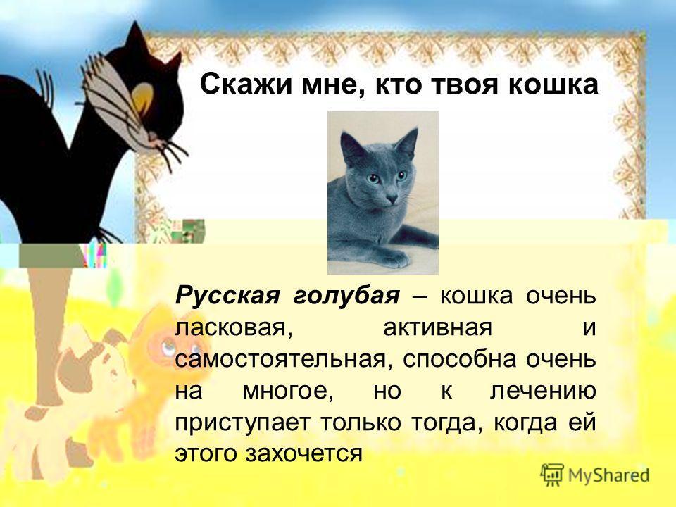 Скажи мне, кто твоя кошка Русская голубая – кошка очень ласковая, активная и самостоятельная, способна очень на многое, но к лечению приступает только тогда, когда ей этого захочется