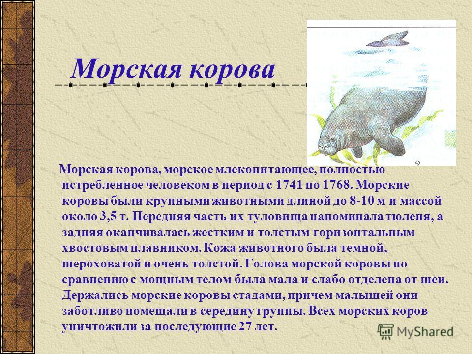 Странствующий голубь Странствующий голубь, вымершая птица семейства голубей. Едва ли какая-нибудь птица на Земле встречалась в таких огромных количествах, как странствующий голубь, обитавший на территории современных США и Южной Канады. Голубей, мясо