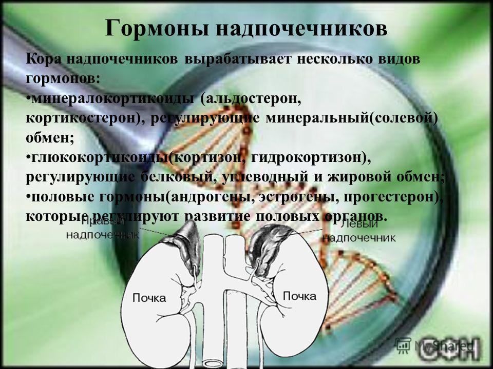 Гормоны надпочечников Кора надпочечников вырабатывает несколько видов гормонов: минералокортикоиды (альдостерон, кортикостерон), регулирующие минеральный(солевой) обмен; глюкокортикоиды(кортизон, гидрокортизон), регулирующие белковый, углеводный и жи