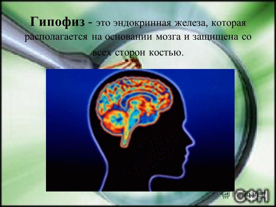 Гипофиз - это эндокринная железа, которая располагается на основании мозга и защищена со всех сторон костью.