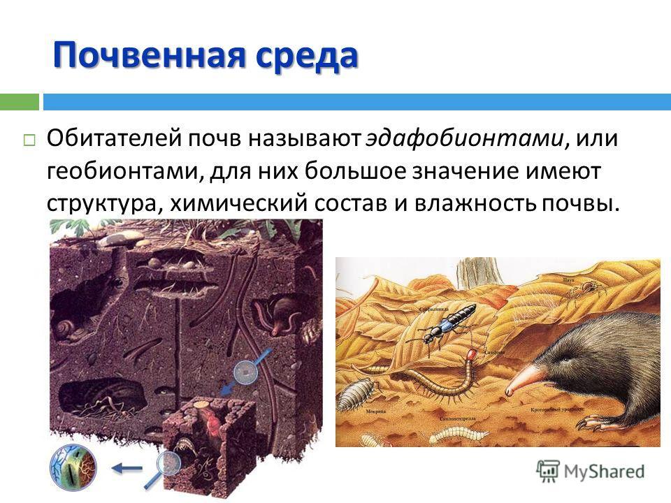 Почвенная среда Обитателей почв называют эдафобионтами, или геобионтами, для них большое значение имеют структура, химический состав и влажность почвы.