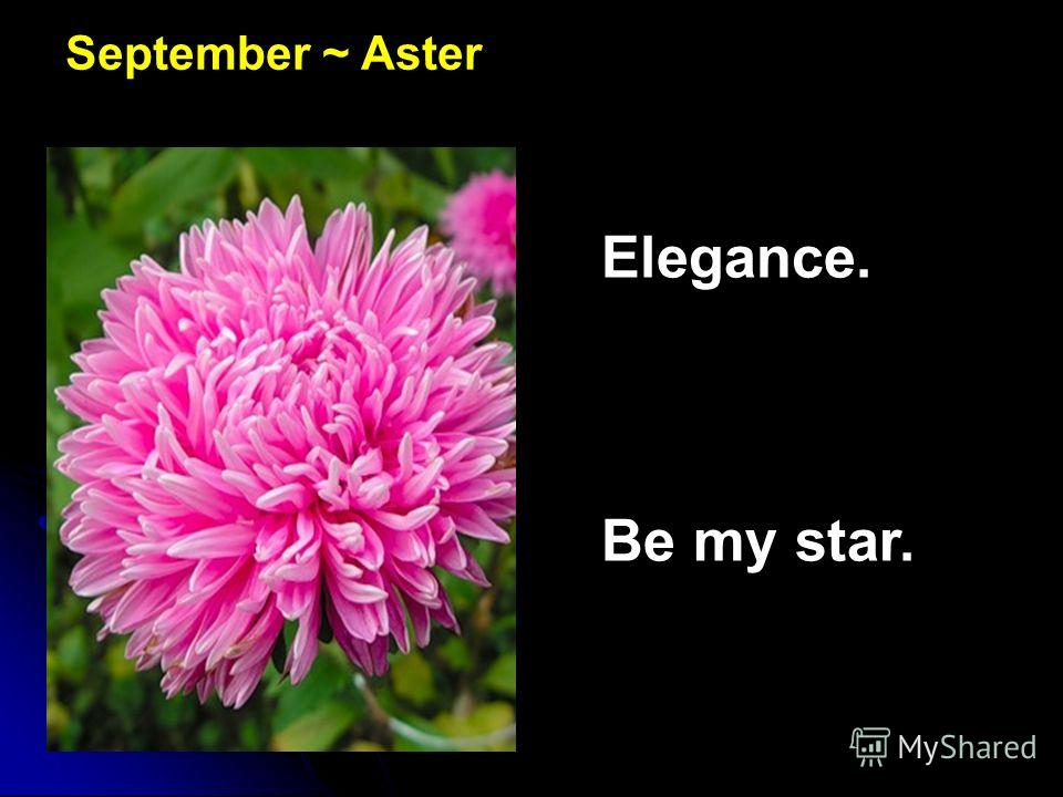 September ~ Aster Elegance. Be my star.