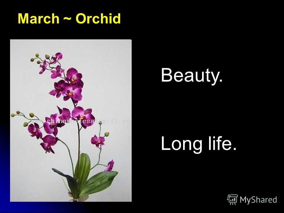 March ~ Orchid Beauty. Long life.