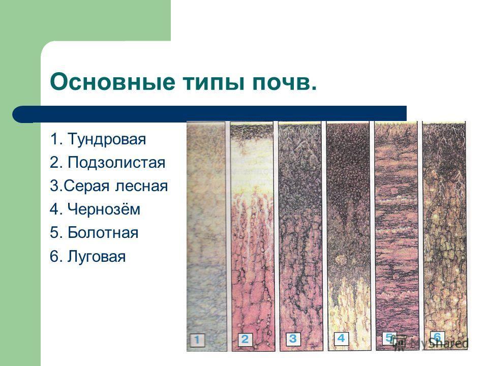 Основные типы почв. 1. Тундровая 2. Подзолистая 3.Серая лесная 4. Чернозём 5. Болотная 6. Луговая