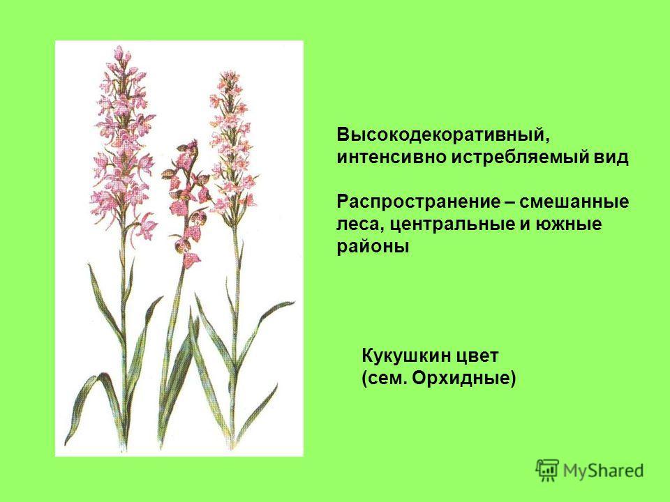 Кукушкин цвет (сем. Орхидные) Высокодекоративный, интенсивно истребляемый вид Распространение – смешанные леса, центральные и южные районы