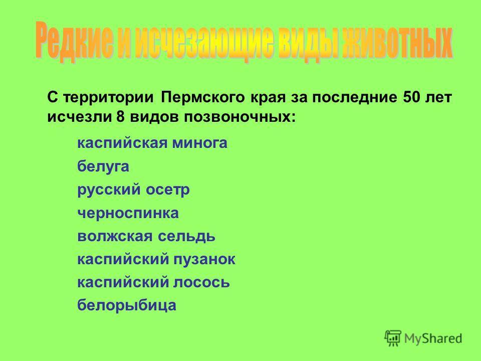 С территории Пермского края за последние 50 лет исчезли 8 видов позвоночных: каспийская минога белуга русский осетр черноспинка волжская сельдь каспийский пузанок каспийский лосось белорыбица