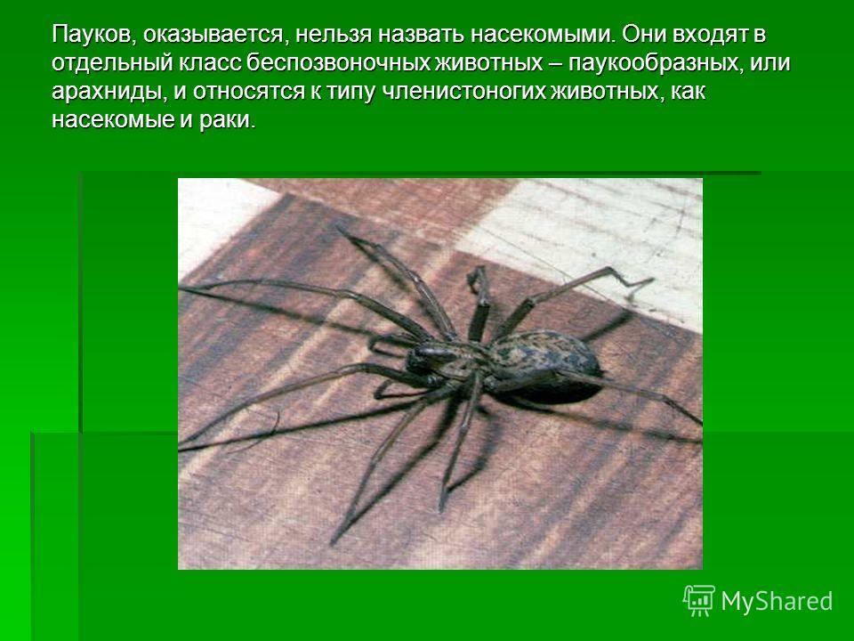 Пауков, оказывается, нельзя назвать насекомыми. Они входят в отдельный класс беспозвоночных животных – паукообразных, или арахниды, и относятся к типу членистоногих животных, как насекомые и раки.