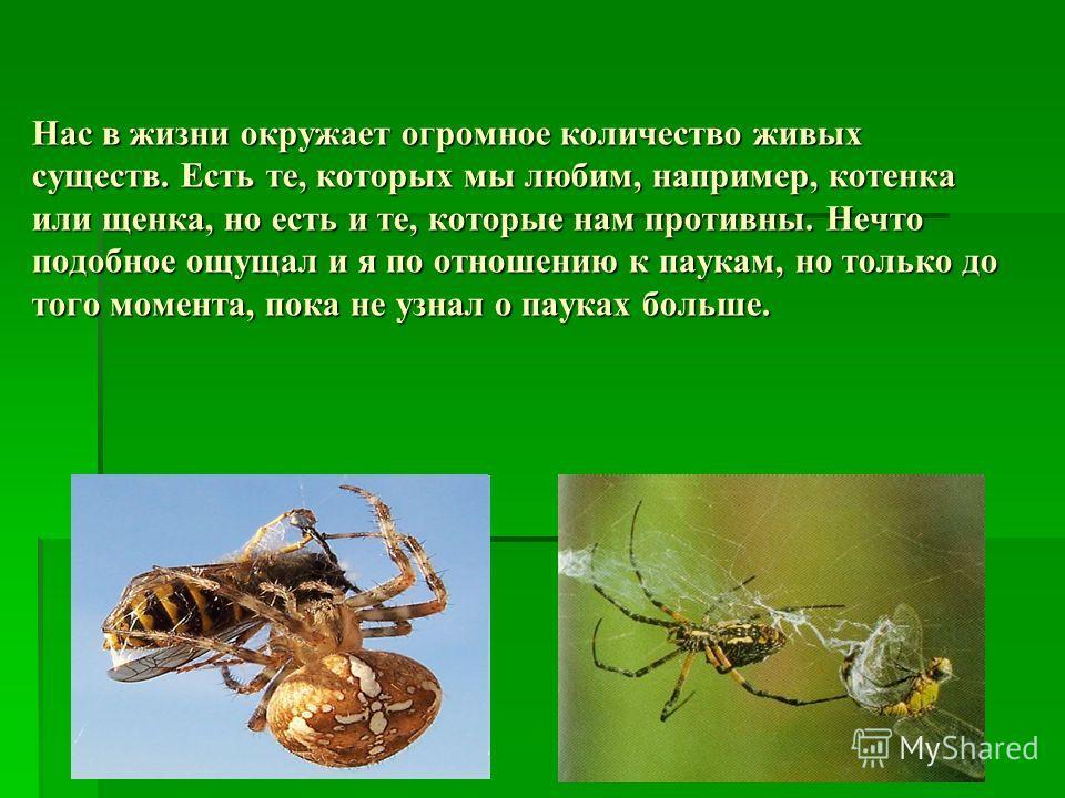 Нас в жизни окружает огромное количество живых существ. Есть те, которых мы любим, например, котенка или щенка, но есть и те, которые нам противны. Нечто подобное ощущал и я по отношению к паукам, но только до того момента, пока не узнал о пауках бол