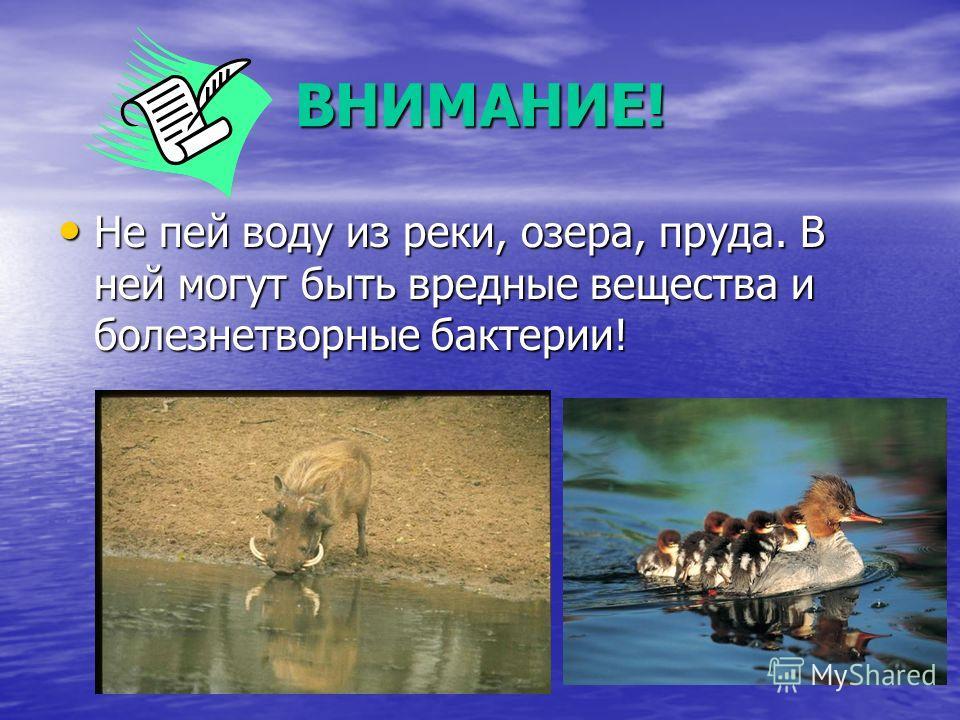 ВНИМАНИЕ! Не пей воду из реки, озера, пруда. В ней могут быть вредные вещества и болезнетворные бактерии! Не пей воду из реки, озера, пруда. В ней могут быть вредные вещества и болезнетворные бактерии!