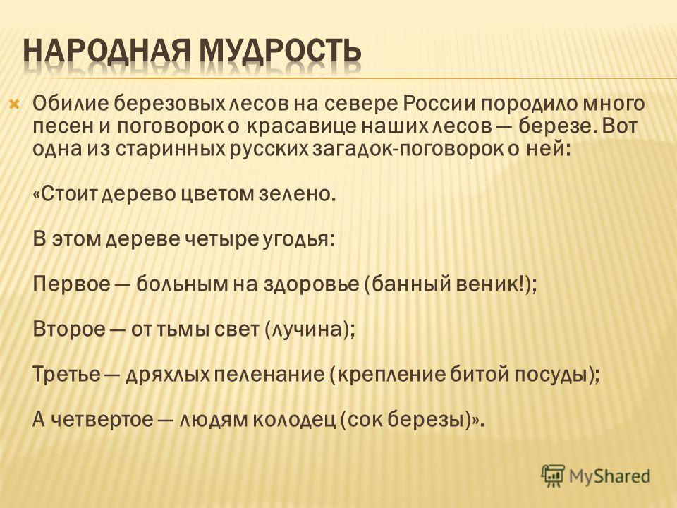 Обилие березовых лесов на севере России породило много песен и поговорок о красавице наших лесов березе. Вот одна из старинных русских загадок-поговорок о ней: «Стоит дерево цветом зелено. В этом дереве четыре угодья: Первое больным на здоровье (банн