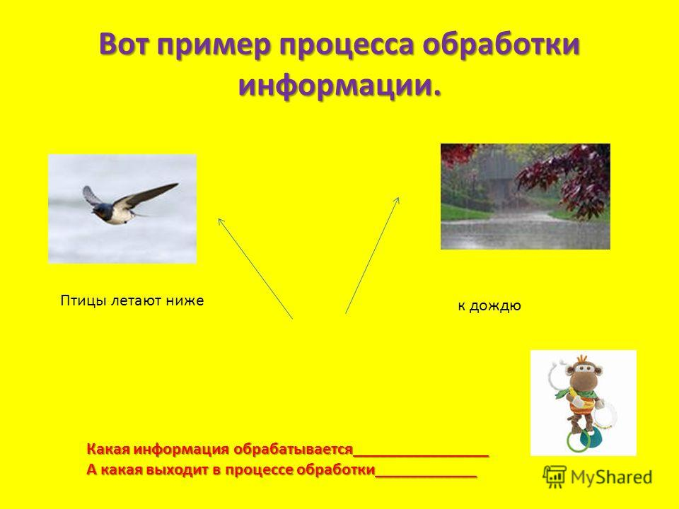 Вот пример процесса обработки информации. Птицы летают ниже к дождю Какая информация обрабатывается________________ А какая выходит в процессе обработки____________