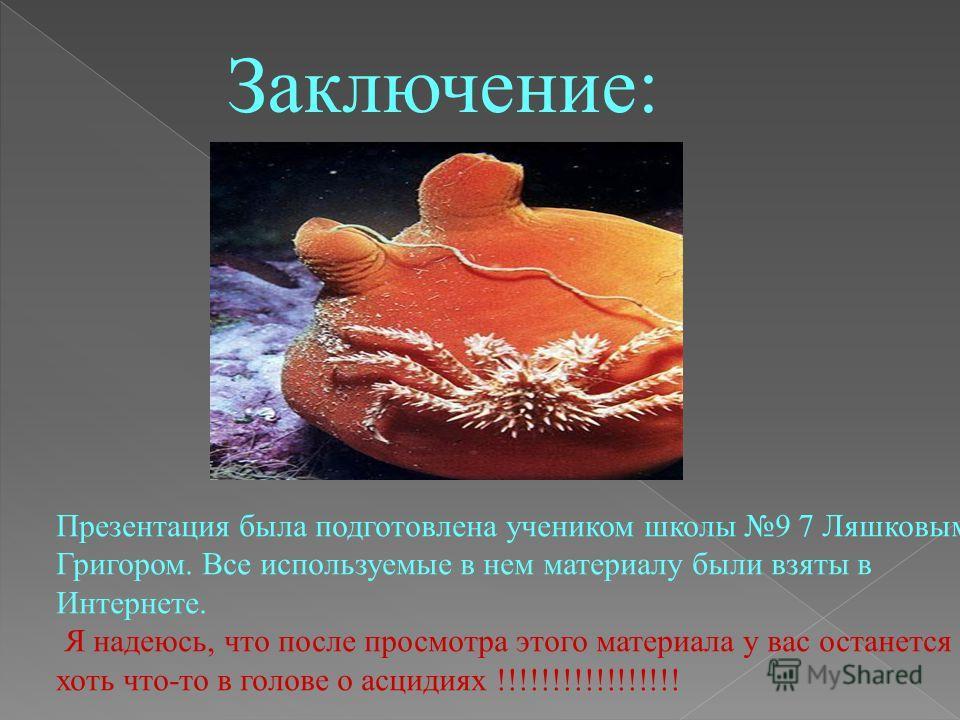 До сих пор биологи считали, что только самые примитивные животные, вроде медуз или губок, обладают такими способностями. Оказалось, что и асцидии вида Botrylloides leachi, наиболее близкий к позвоночным класс морских хордовых животных, также могут ре