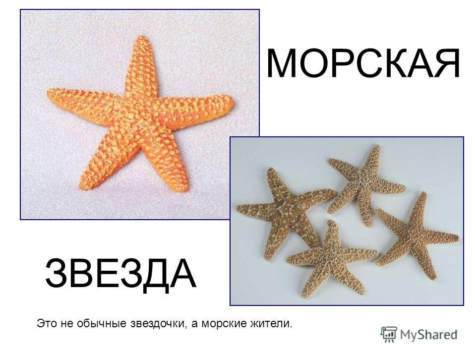Это не обычные звездочки, а морские жители. МОРСКАЯ ЗВЕЗДА