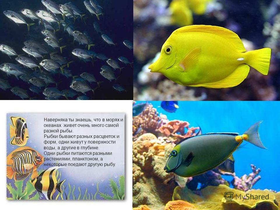 Наверняка ты знаешь, что в морях и океанах живет очень много самой разной рыбы. Рыбки бывают разных расцветок и форм, одни живут у поверхности воды, а другие в глубине. Одни рыбки питаются разными растениями, планктоном, а некоторые поедают другую ры