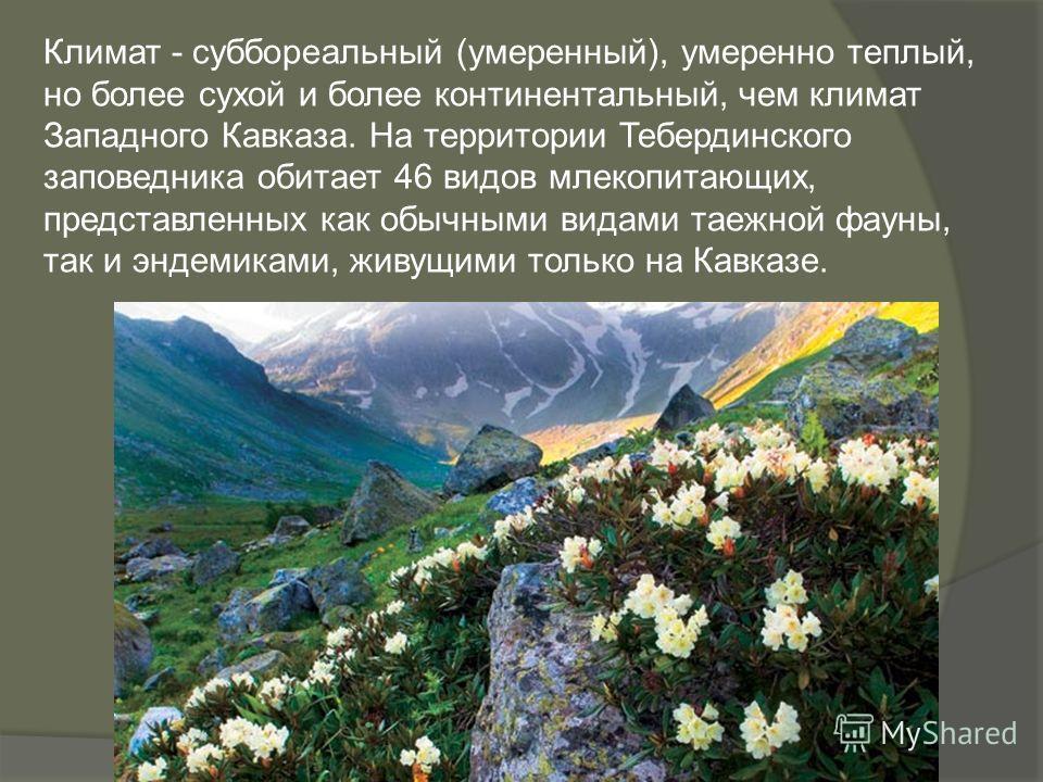 Климат - суббореальный (умеренный), умеренно теплый, но более сухой и более континентальный, чем климат Западного Кавказа. На территории Тебердинского заповедника обитает 46 видов млекопитающих, представленных как обычными видами таежной фауны, так и