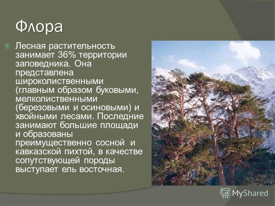 Флора Лесная растительность занимает 36% территории заповедника. Она представлена широколиственными (главным образом буковыми, мелколиственными (березовыми и осиновыми) и хвойными лесами. Последние занимают большие площади и образованы преимущественн